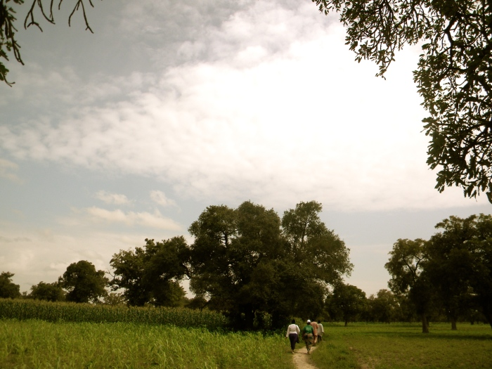 Mali agriculture field