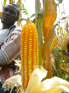 agriculture corn maize Mali village rural
