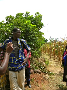 agriculture Mali rural