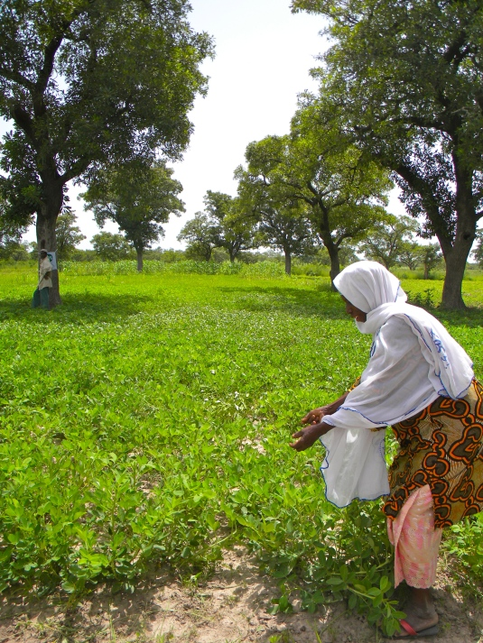Mali rural agriculture field farmer