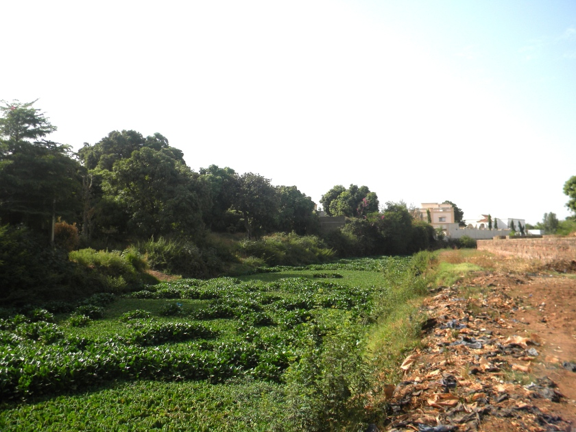 Mali Bamako urban garden agriculture farmer farm