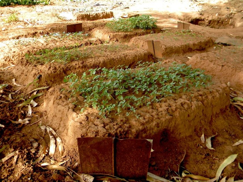 Bamako Mali urban garden agriculture farm farmer test field pilot