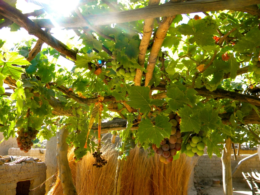 Mali rural village garden trellis design grape vine farm agriculture