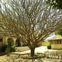Mali Wins Global Tree Competition !!