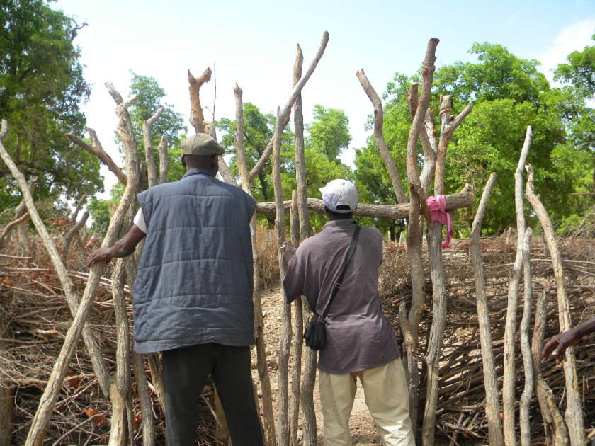 Mali rural village fence traditional agriculture garden men work teamwork collaborate