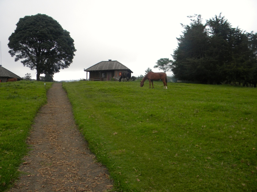 Kenya Mt castle forest lodge mountain mist horse cabin