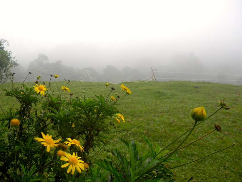 Kenya wild flowers mountain mist