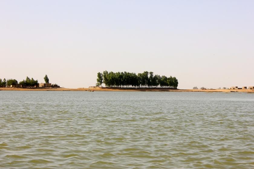 Mali Mopti island Niger river fleuve tree