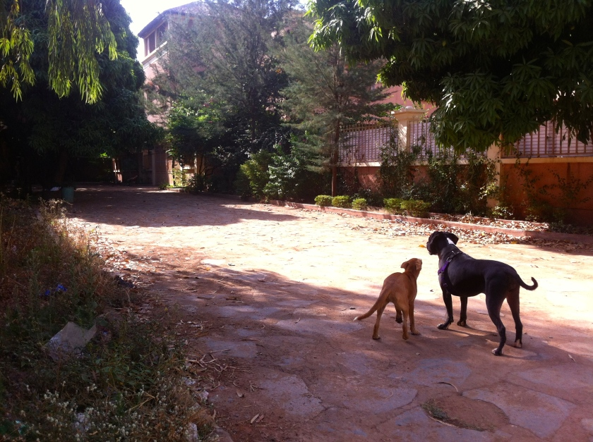 Mali Bamako neighborhood dogs cobblestone street road