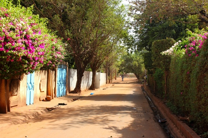 Mali Bamako neighborhood street road bougainvillea flower home house
