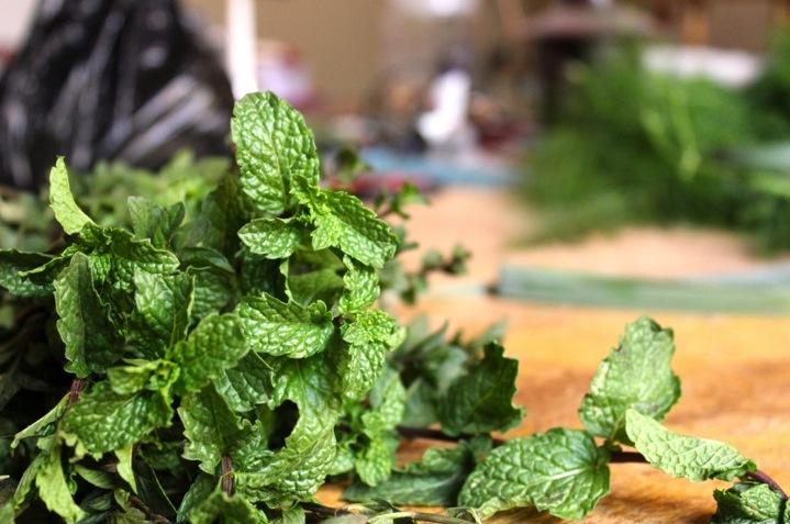 fresh mint bunch urban garden