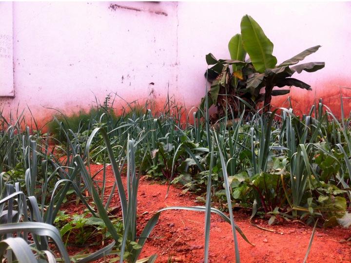 Bamako Mali urban garden leeks farm