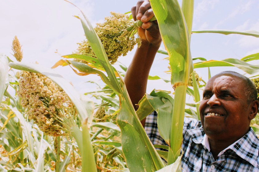 sorghum agriculture research scientist Africa Somaliland Somali