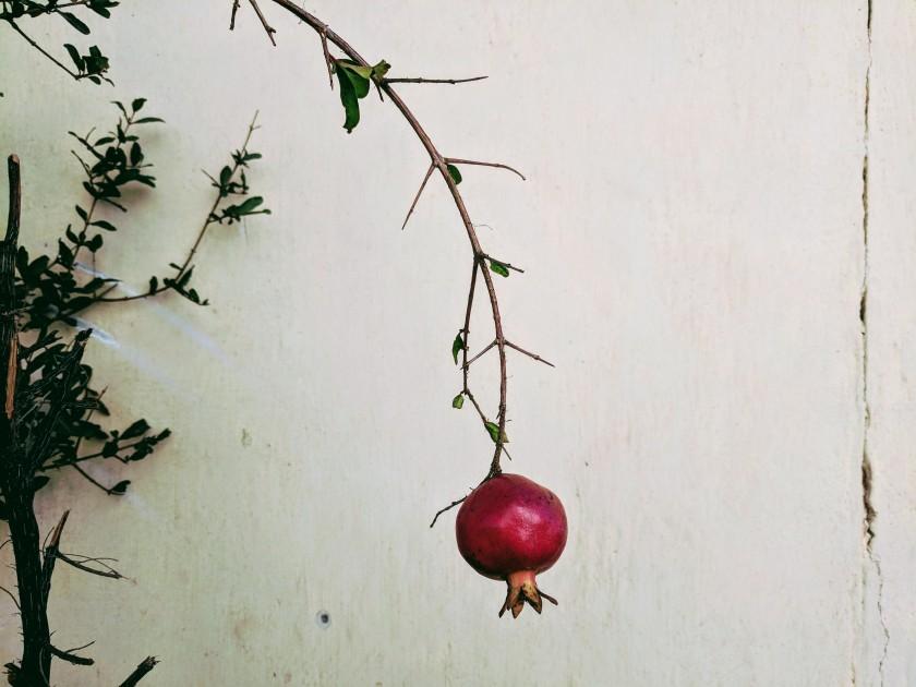 pomegranate Somaliland Hargeisa Hargeysa